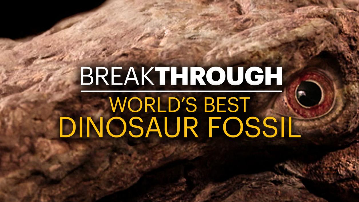Curiositystream Breakthrough World S Best Dinosaur Fossil
