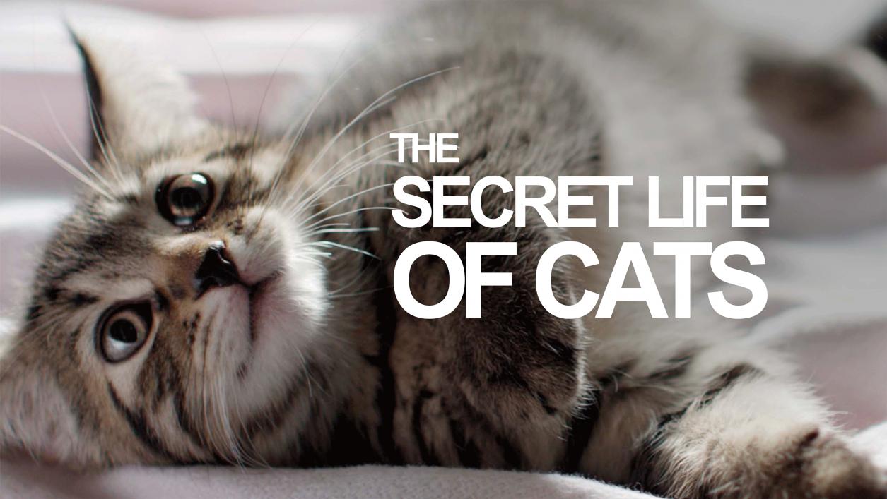 زندگی پنهان گربه سانان (مستند)